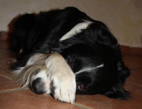 hund stubenrein tricks